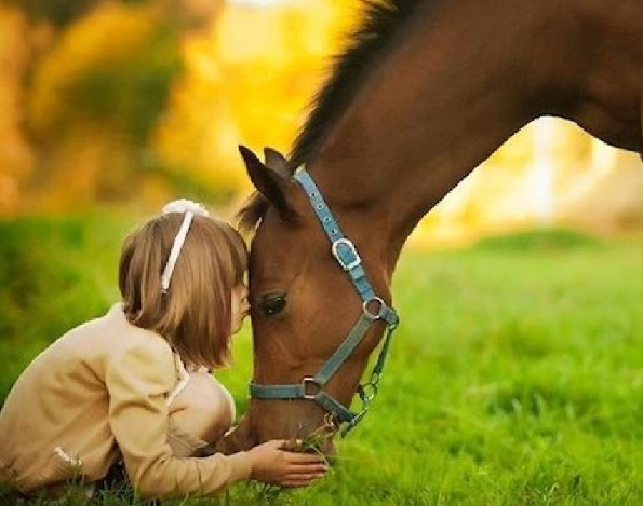 Empatia e grandi occhi il segreto dell ippoterapia for Disegno cavallo per bambini