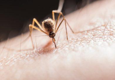 Zanzare e repellenti anti puntura