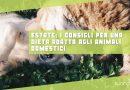 Estate: i consigli per una dieta adatta agli animali domestici