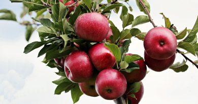 Azione antinfiammatoria delle mele